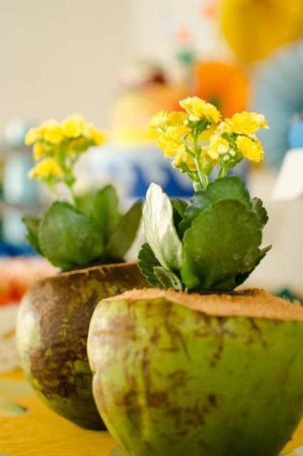coco usado como vaso de flor em centro de mesa