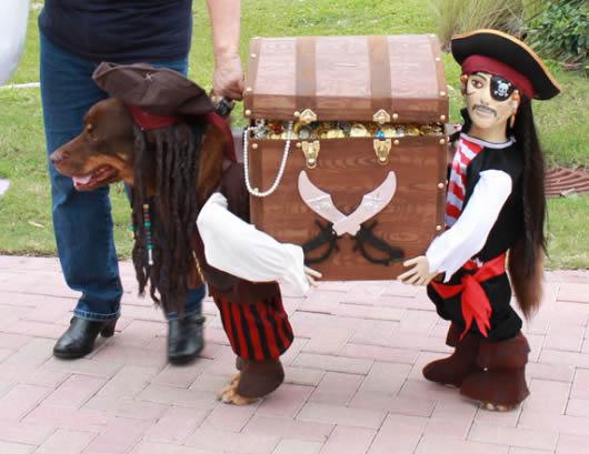 Fantasias para cachorros tesouro pirata