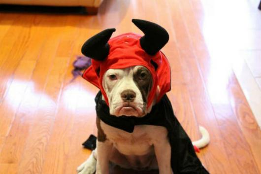 Fantasias para cachorros diabo