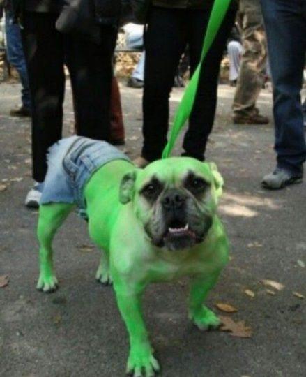 Fantasias para cachorros hulk