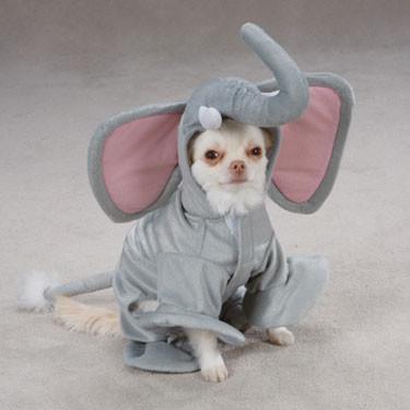 Fantasias para cachorros elefante