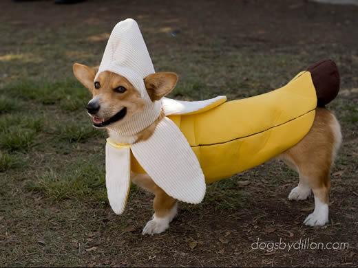 Fantasias para cachorros banana