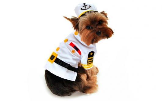 Fantasias para cachorros capitão de embarcação