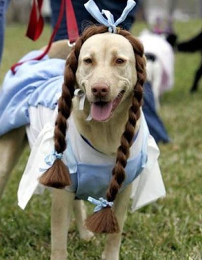 Fantasias para cachorros peruca de tranças