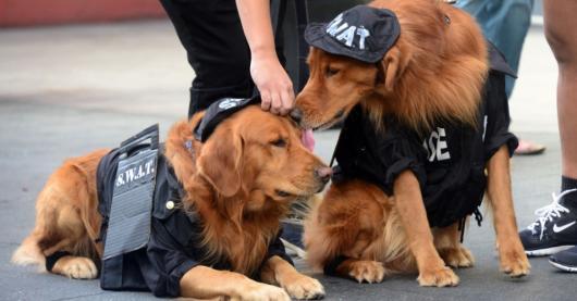 Fantasias para cachorros policial