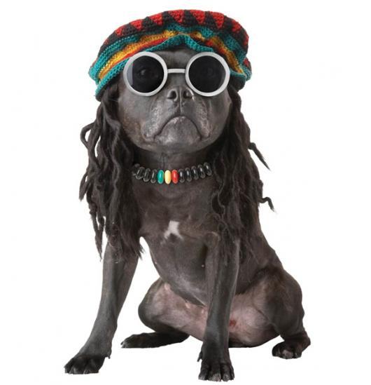 Fantasias para cachorros hippie