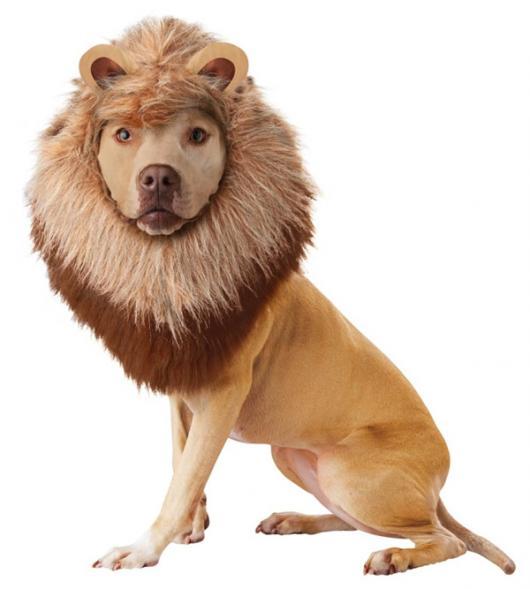 Fantasias para cachorros leão