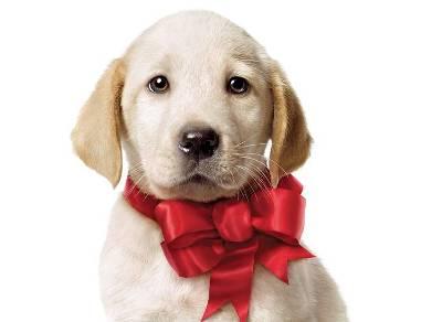 Presentes de natal baratos filhote de cachorro