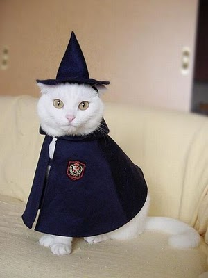 Fantasia Harry Potter para gato