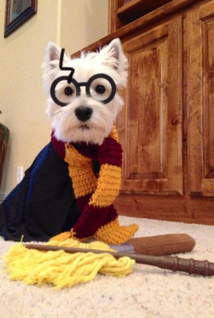 Fantasia Harry Potter para pet