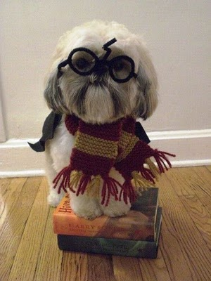 Fantasia Harry Potter para lhasa apso
