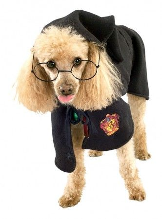 Fantasia Harry Potter para cachorro