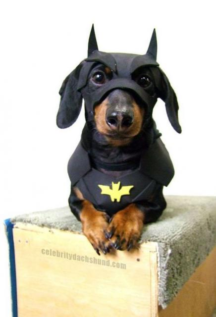 Fantasias Criativas pet Batman