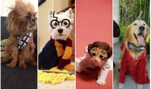 Fantasias Criativas pet Harry Potter
