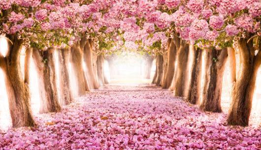 Painel de Festa Infantil 3D com caminho de rosas e árvores