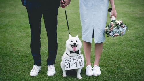 Pré-wedding com pet